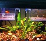 mix akvarijskih ribica živorotke: gupi, plati i moli
