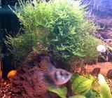 ribe puzevi i akvarij