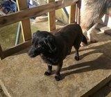 pronađen/poklanja se mali crni pas