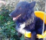 Psić Bonzo