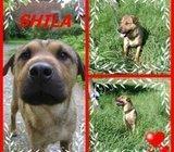 Shila traži dom!