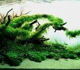 Izrada, postavljanje, uređenje i održavanje akvarija