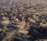 Zemljiste za Vikend - bascu- vocnjak