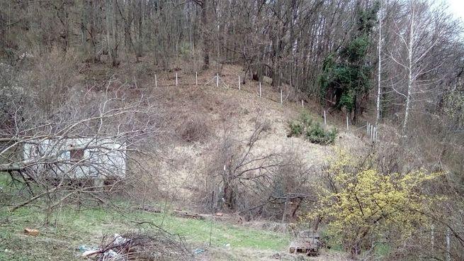 Poljoprivredno zemljište Cepeliš (Petrinja) (PRODAJA ILI ZAMJENA)