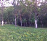 Građevinsko zemljište s voćnjakom