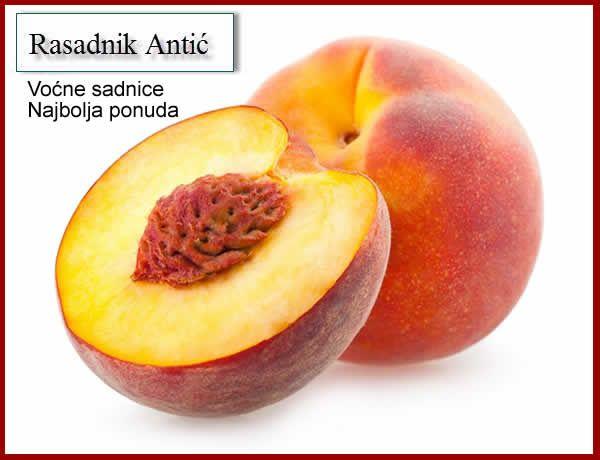 Sadnice voća svih vrsta po najpovoljnijim cenama