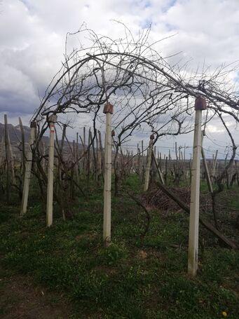 Klijet i vinogrdad